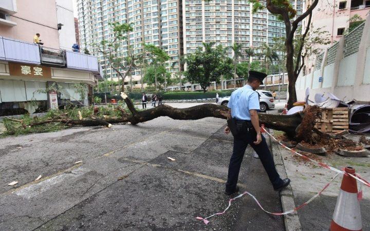 Pohon tumbang kembali memakan korban