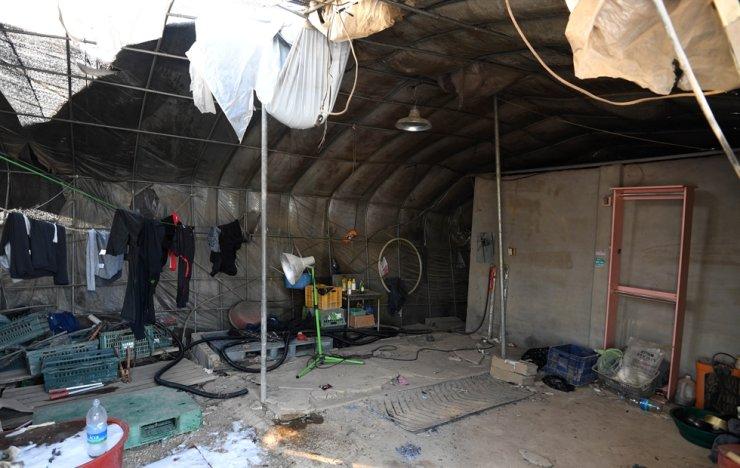 Pekerja migran menghadapi kondisi yang mengerikan di pertanian Korea Selatan